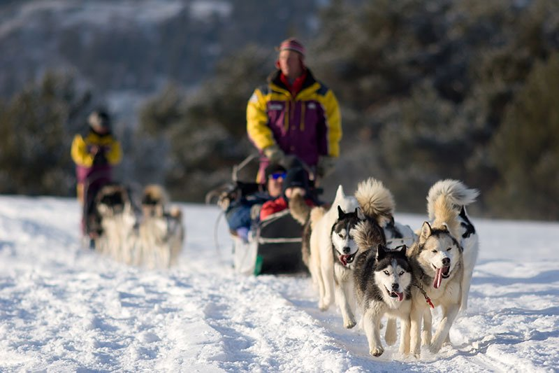 Jackson WY Winter Adventures